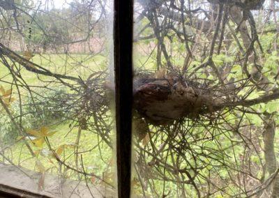 birds nest in abandoned farmhouse window