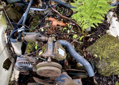 plant-growing-from-engine-bay