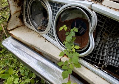 car-with-plant-growing-out-of-headlight