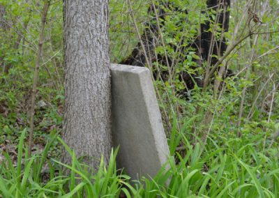 headstone leaning against a tree in an abandoned cemetery