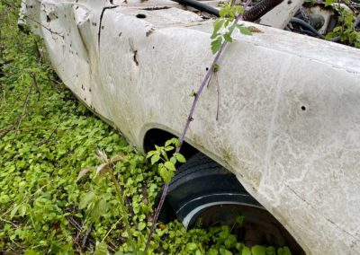 abandoned-car-with-ivy-covering