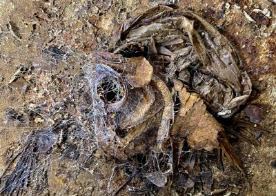 abandoned fish market skeleton
