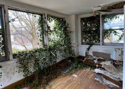 ivy growing through a broken window