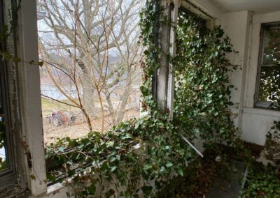 window covered in ivy with a tracker in the background