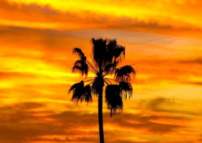 sunset_behind_palm_tree