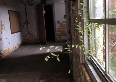 abandoned school window plant